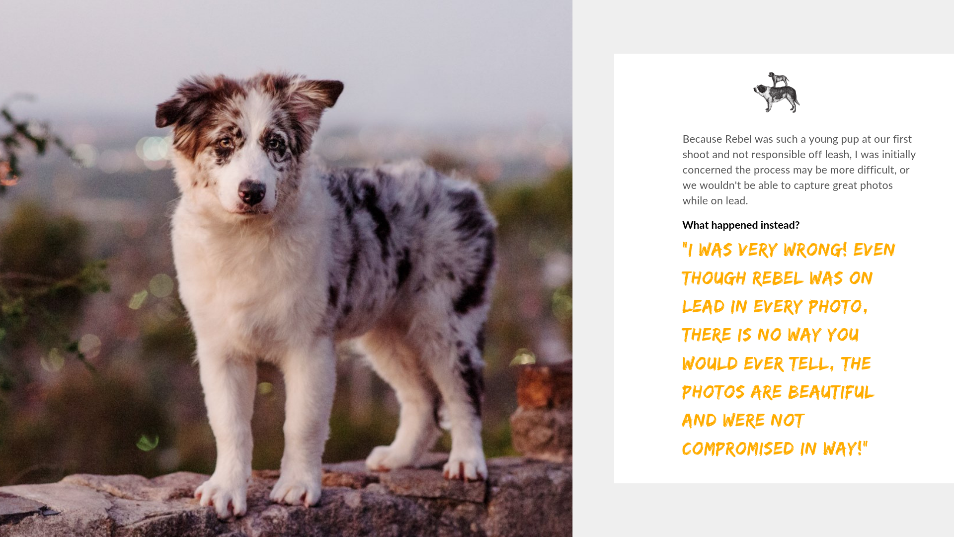 Adelaide's best Dog Photographer