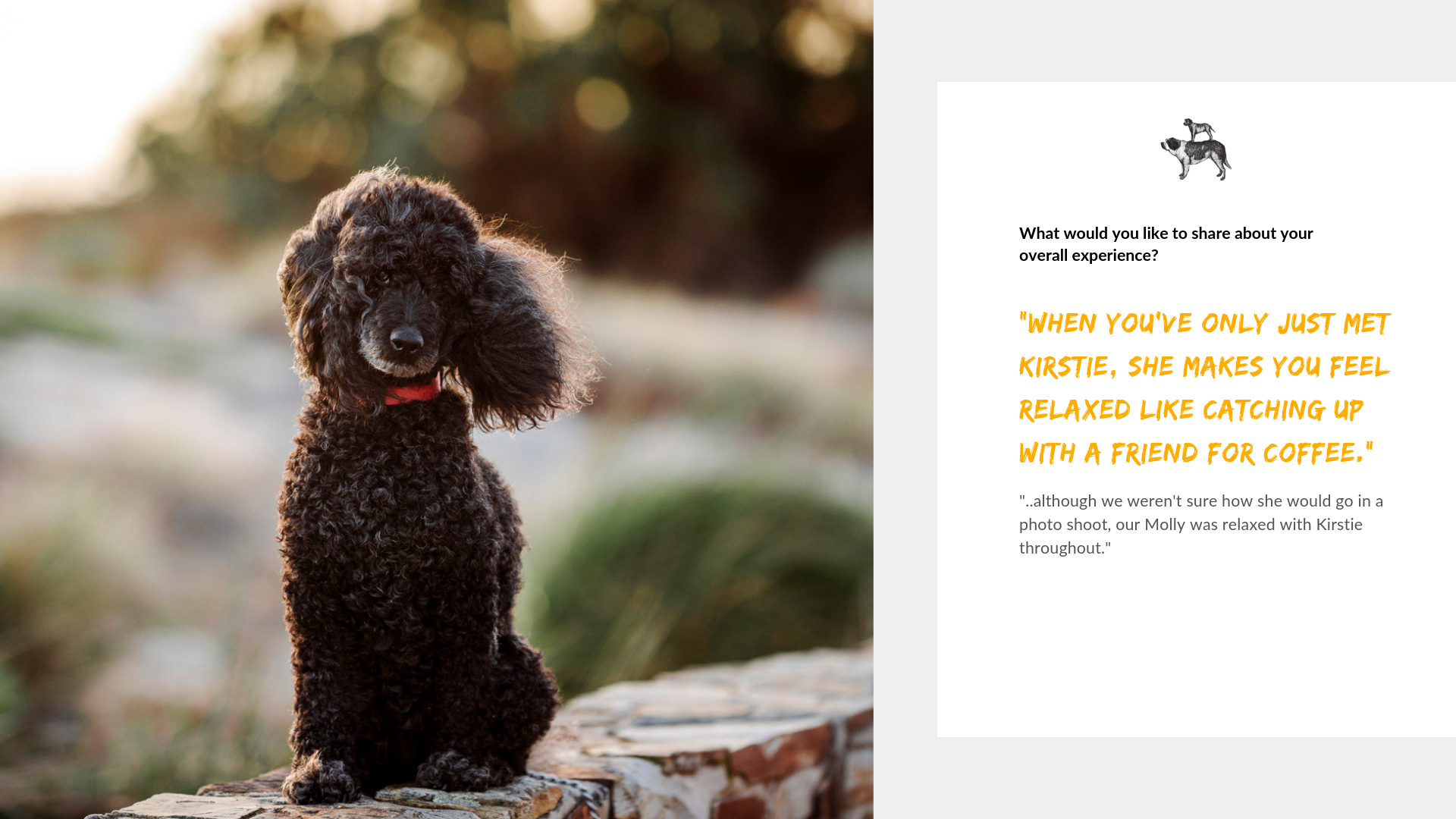 Adelaide's most trusted pet photographer