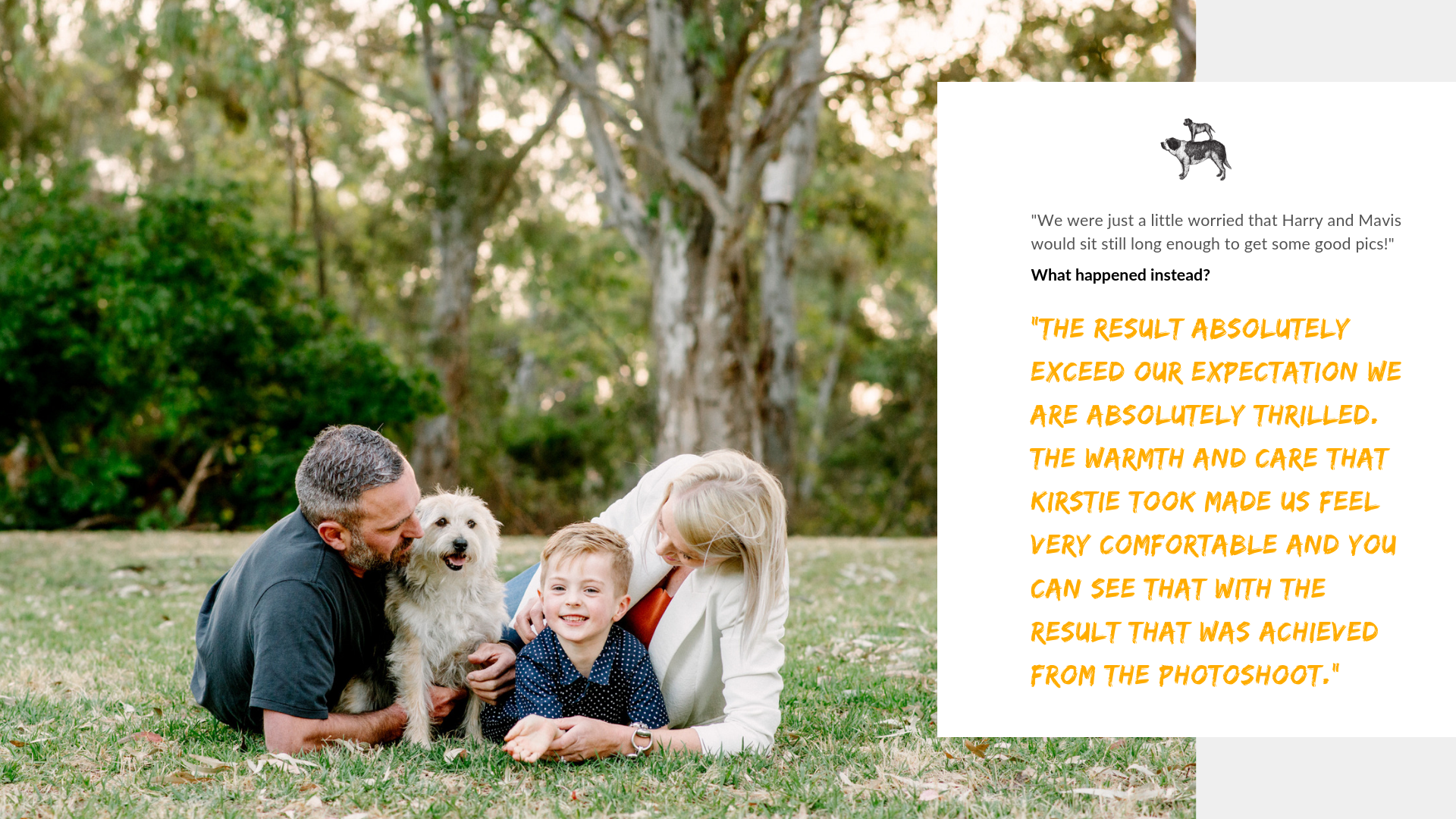 Fabulous Dog photoshoot experience in Adelaide