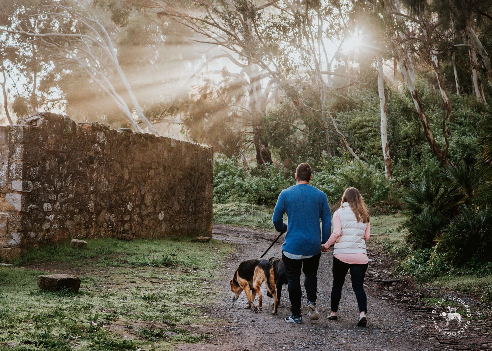 Dog Walks at Anstey Hill in Adelaide's North East