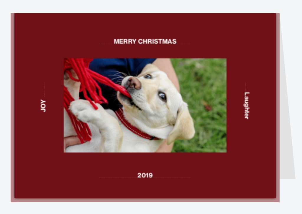 Amazing photographs of your dog - Keep their Christmas costume on for your Christmas card photo, and then have a few natural photos taken too that will be perfect for your walls year round!