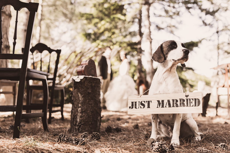 FOREST WEDDING INSPIRATION 1022.jpg