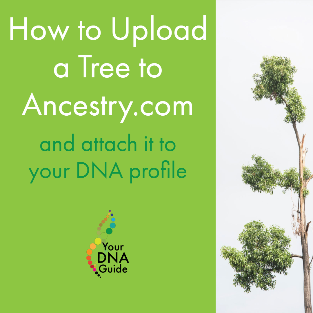 How to upload tree Ancestry attach DNA profile 11.png