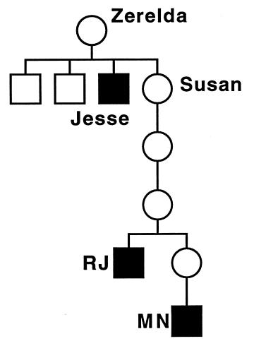 Jesse James DNA tree mtDNA.png