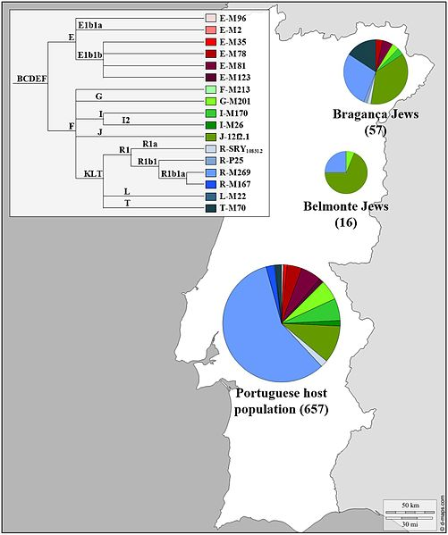 Y Chromosome haplogroup distributions of the Portuguese Sephardic Jews and non-Jewish population. Sectors in pie charts are proportional to haplogroup frequency. Number of total individuals (n) are in brackets for each population. Click on image to see full citation and image source at Wikipedia.com.