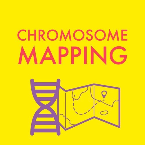 Chromosome Mapping