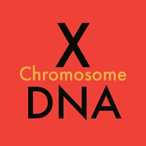 X-Chromosome DNA