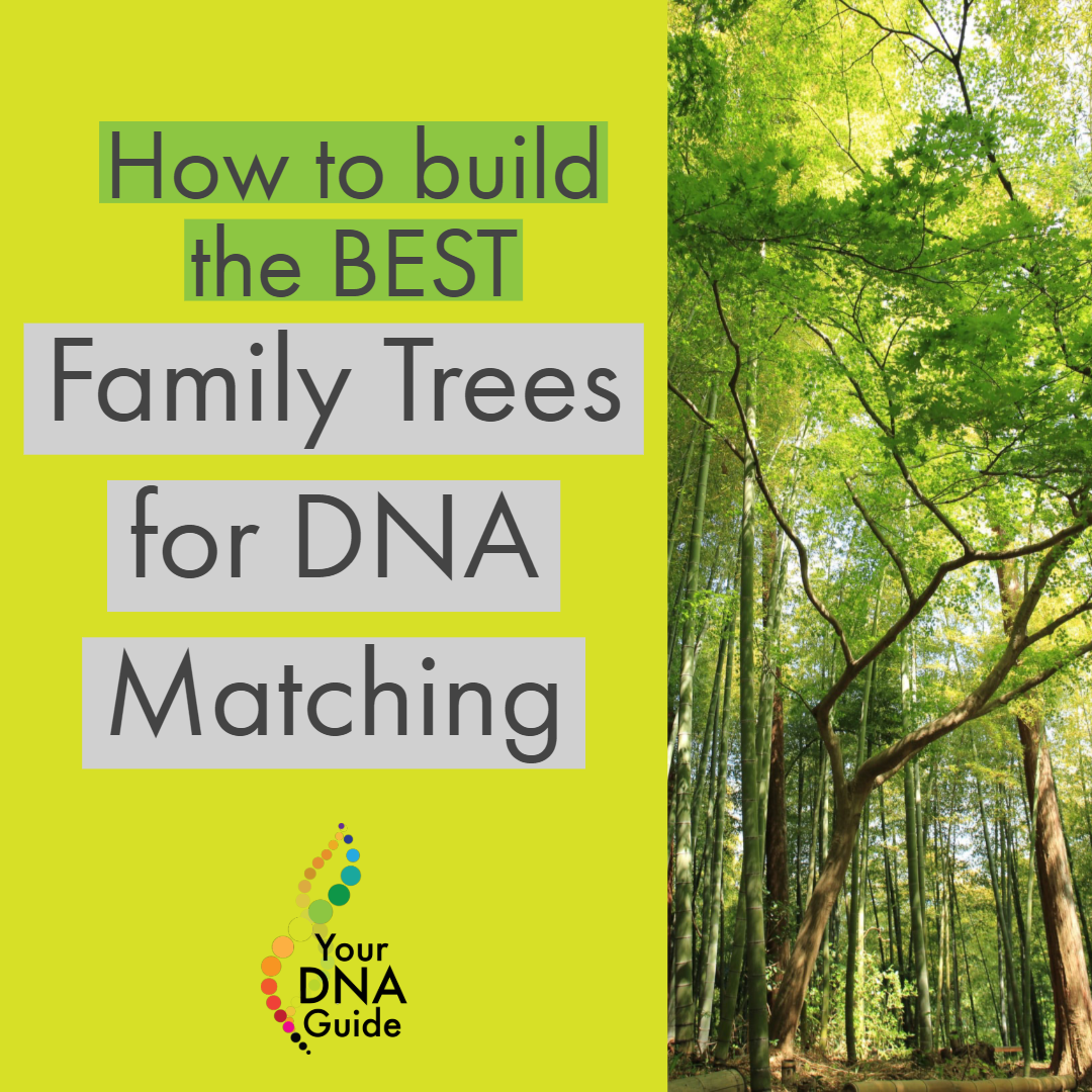 How to build the best family trees for DNA matching