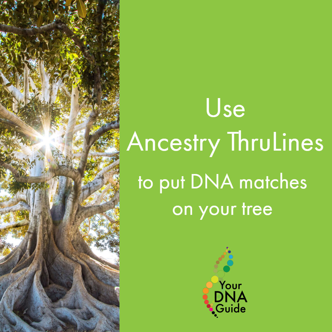 Ancestry ThruLines for DNA Matches