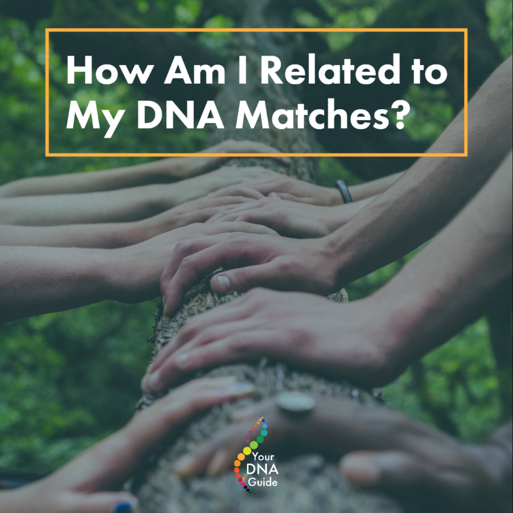 How am I Related to My DNA Matches Shared Centimorgans cM 11.png