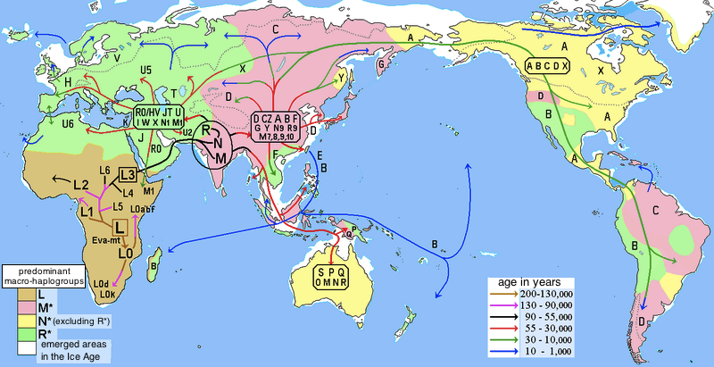 """""""Hypothesized map of human migration based on mitochondrial DNA."""" By User:Maulucioni - Migraciones humanas en haplogrupos mitocondriales.PNG,  CC BY-SA 3.0 ,  https://commons.wikimedia.org/w/index.php?curid=32585433."""