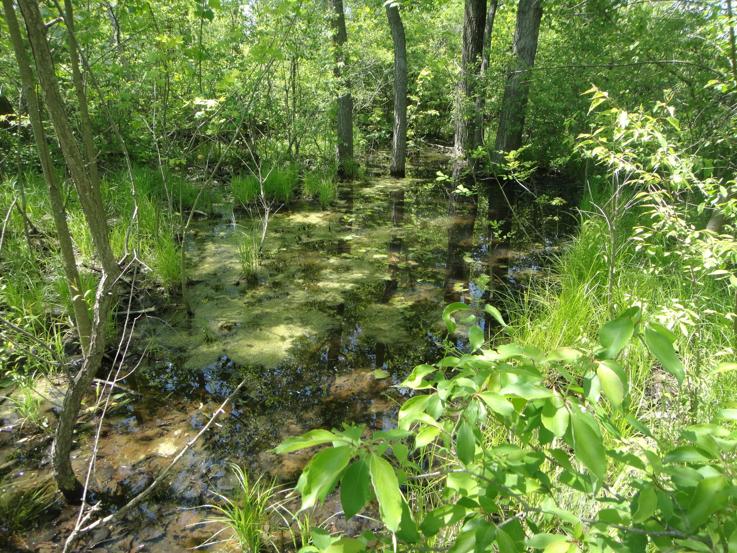 May is American Wetlands Month - Will Shealy, Intern, VET Environmental Engineering, LLCGrace Miller, Environmental Scientist, VET Environmental Engineering, LLC