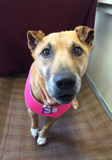 Wendy is a wonderful girl that deserves a wonderful forever home. She loves to explore the sights and smells on daily walks and loves scratches under her chin.  To learn how to adopt Wendy, click  here .