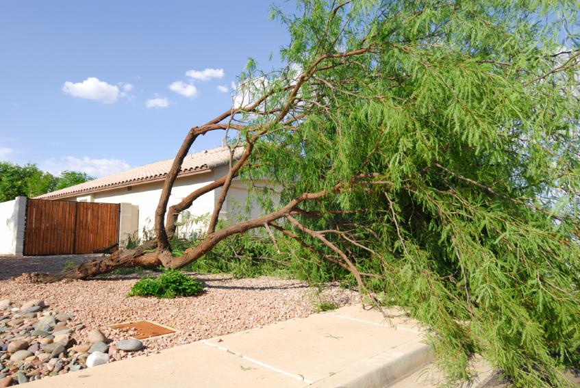 Lidda-Design-Interior-Tucson-Tree