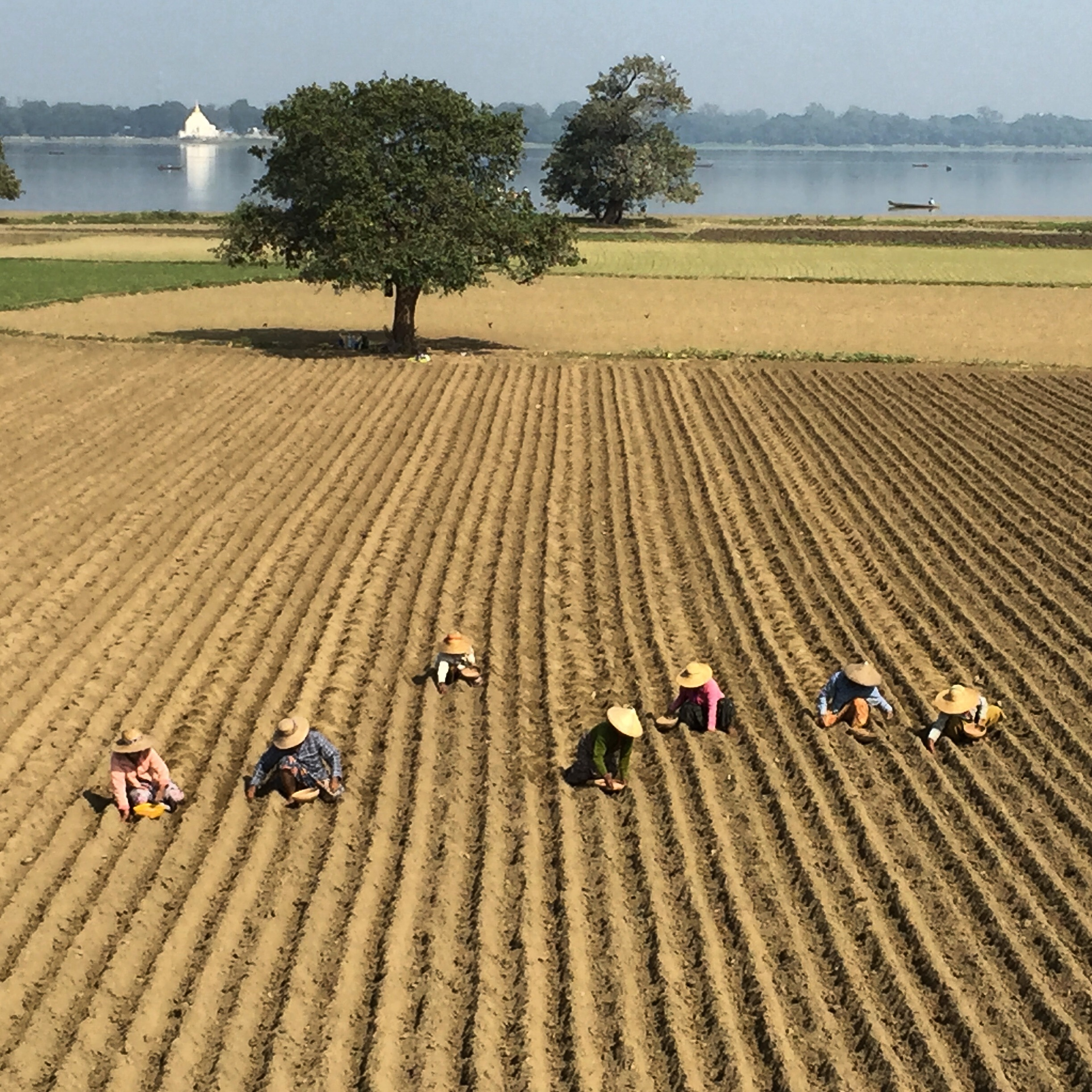 Farmers sowing seeds along the banks for the Irwaddy river outside of Yangon.