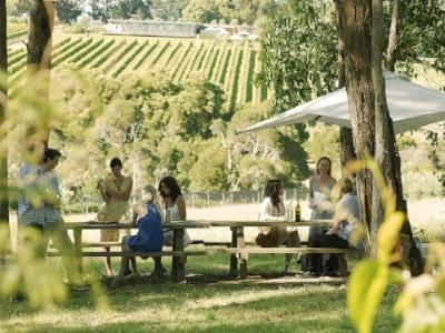 Enjoy a vineyard tour -