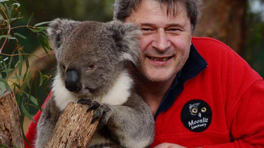 koala 2.jpg