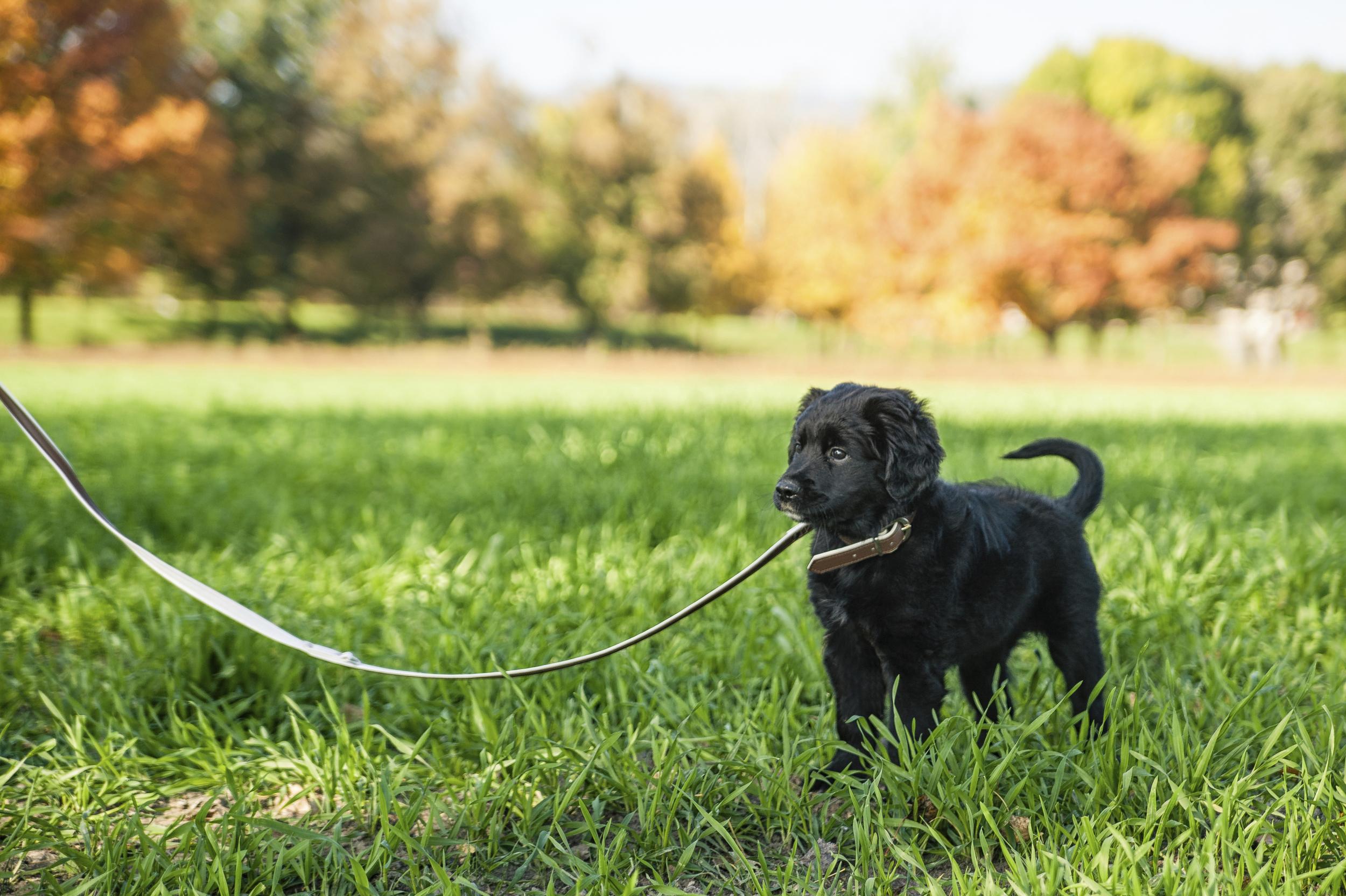 Dog-Walking & Pet Care Services