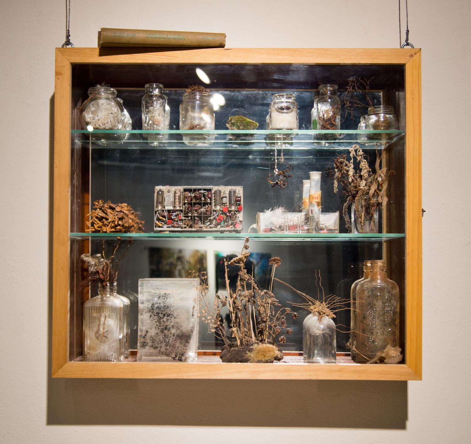 Traditional Cabinet / Untraditional Curiosities