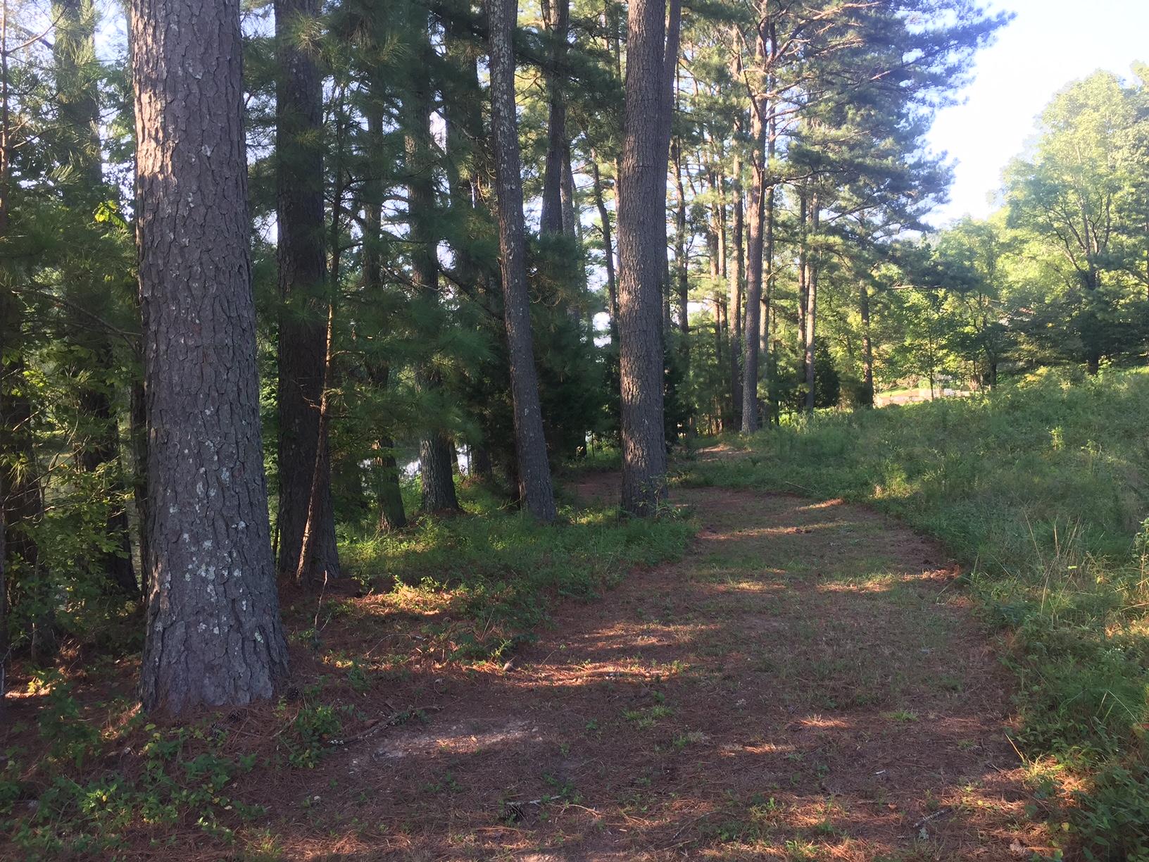 L Lake walk by pines.JPG