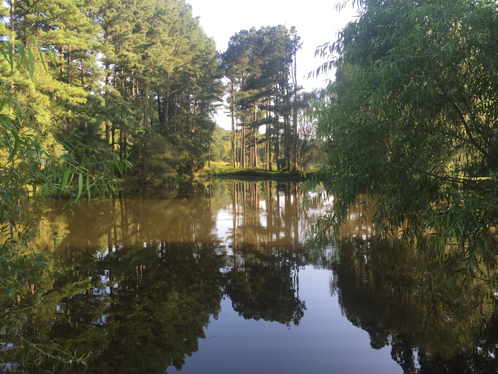 L OS Pond trees.JPG