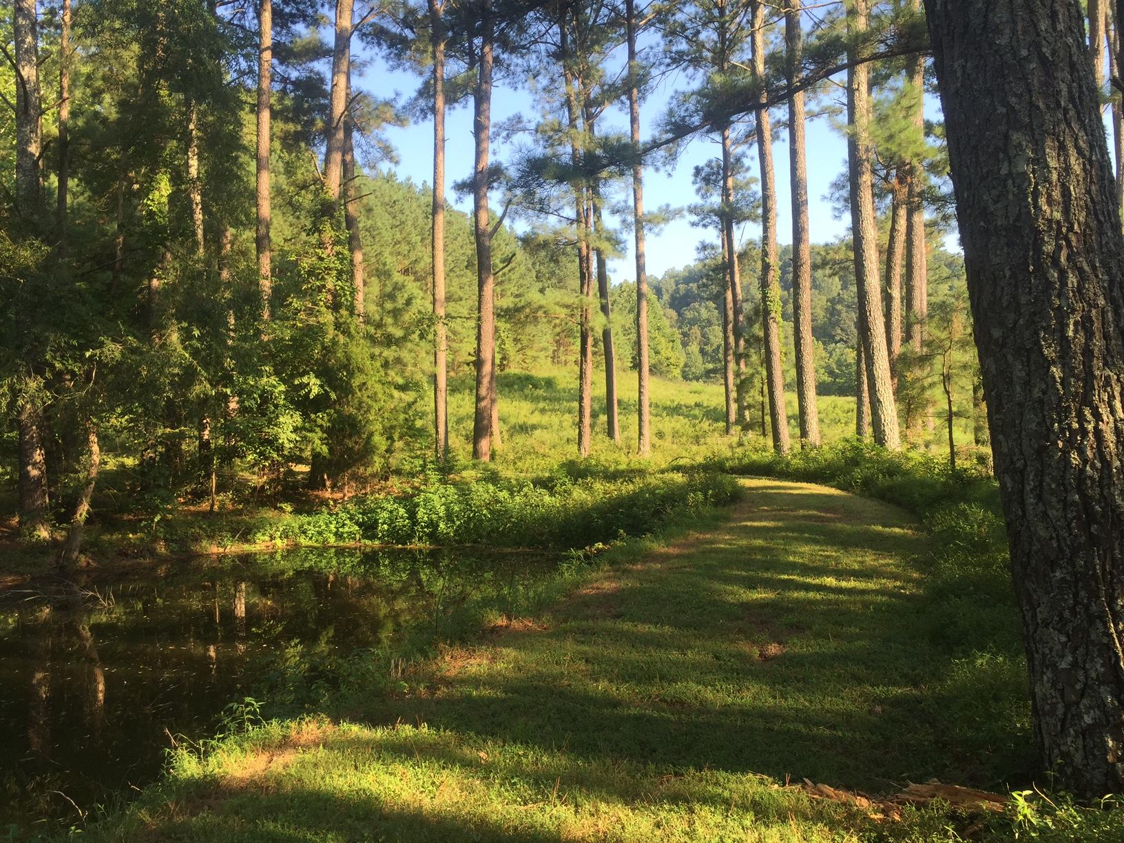 L OS Walk under pines.JPG