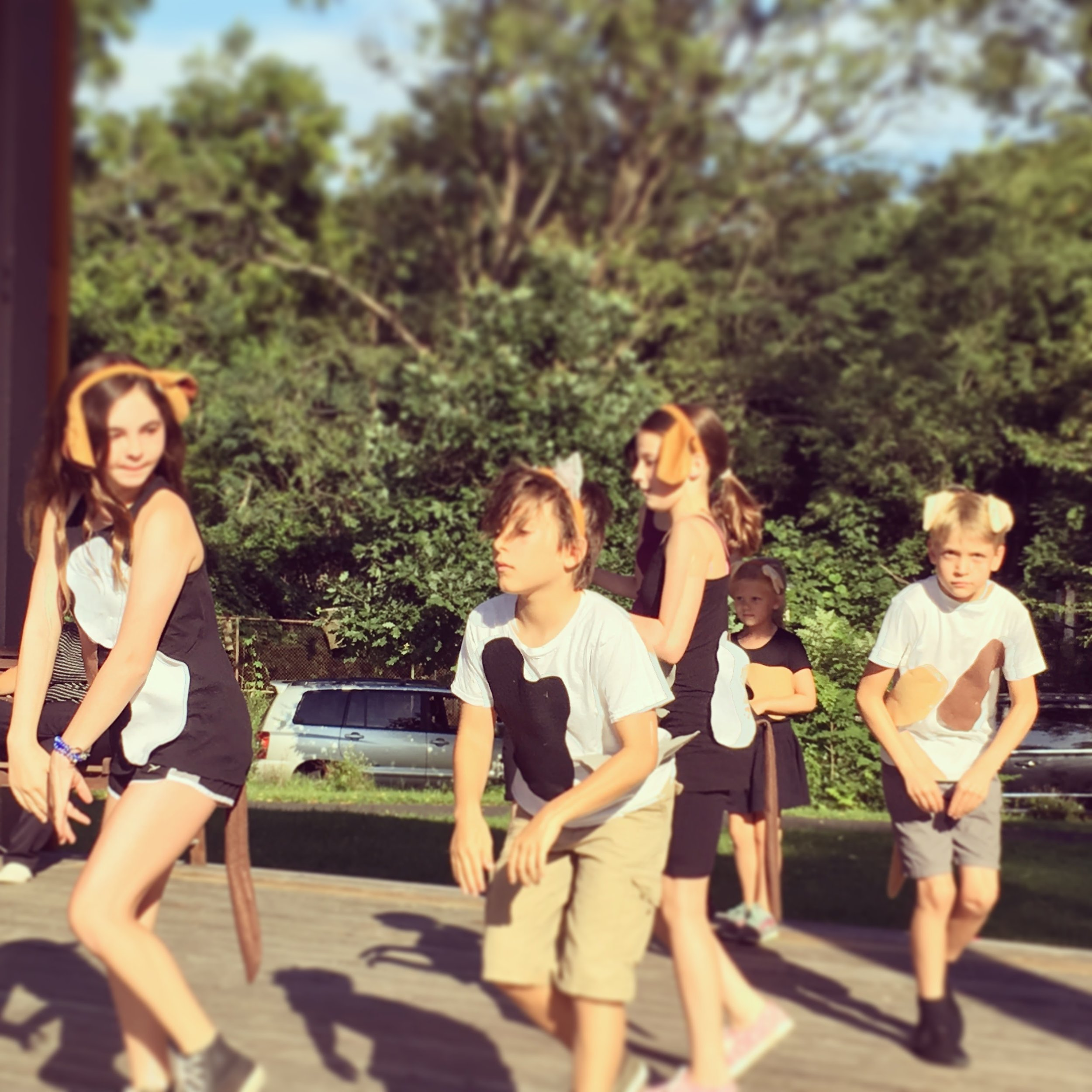 Our company of dancing hounds rehearse under the guidance of Chrissie Leech last summer!