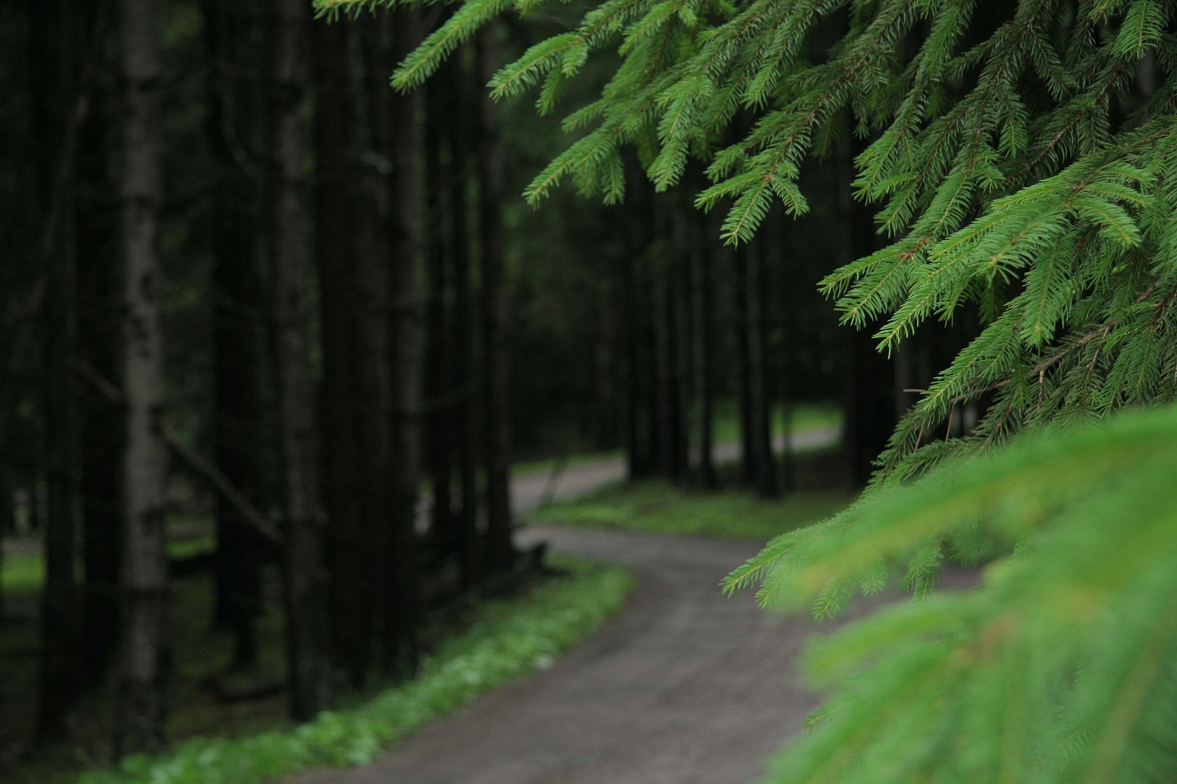 PineSummer_9711.jpg