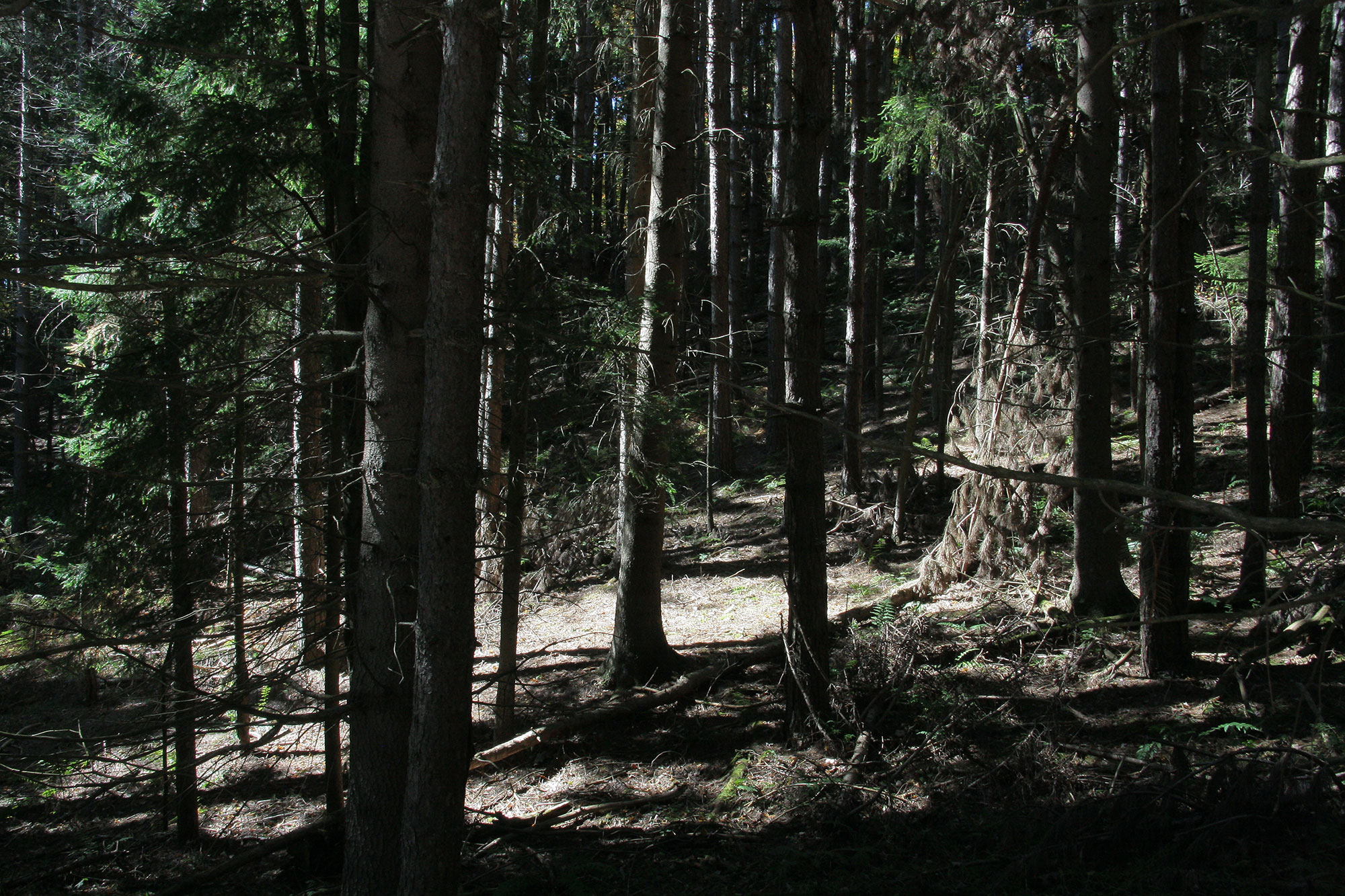 DeadTrees_5798.jpg