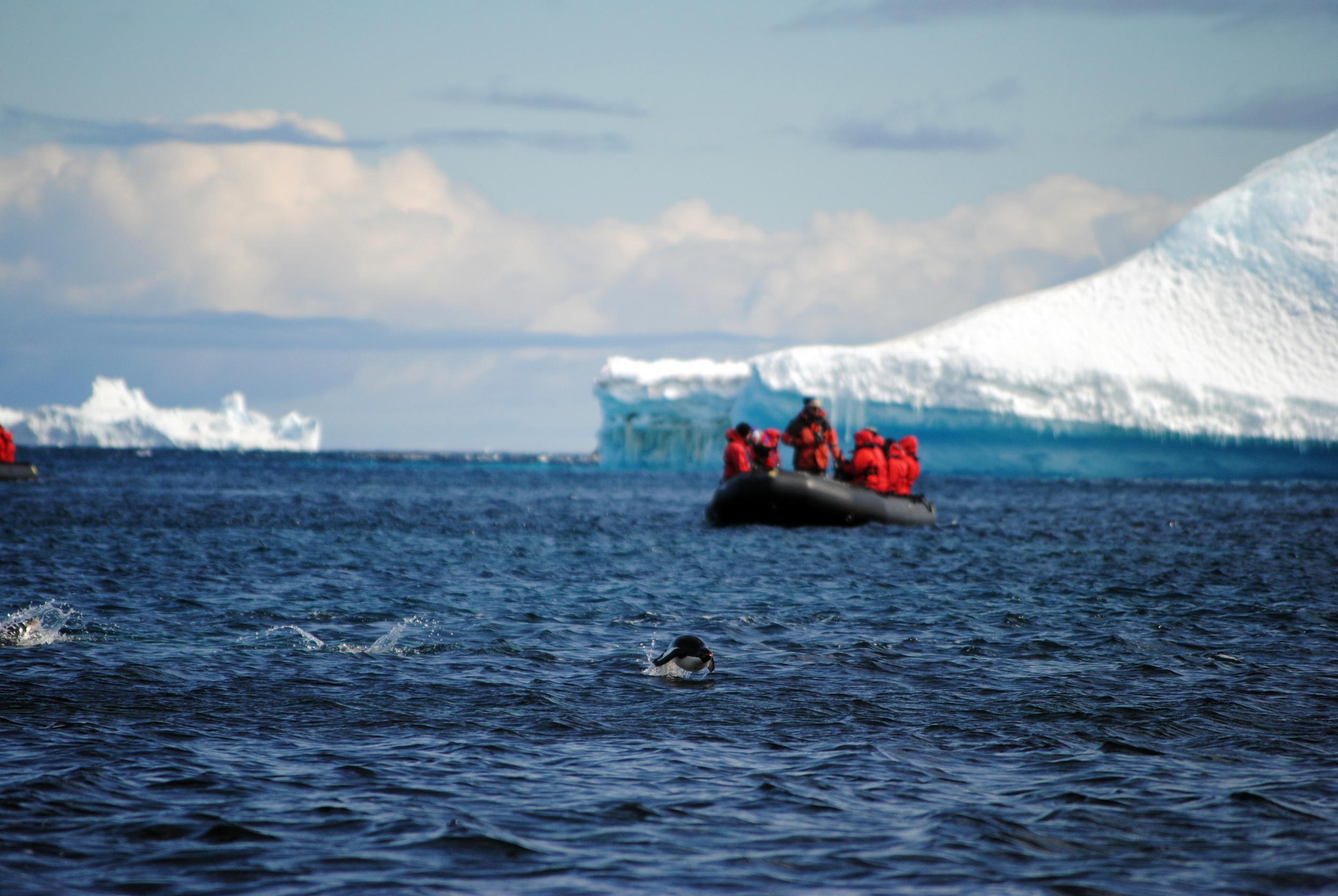 Akademik Ioffe, Zodiac, One Ocean, Antarctica, Penguin - Maggie a la Mode