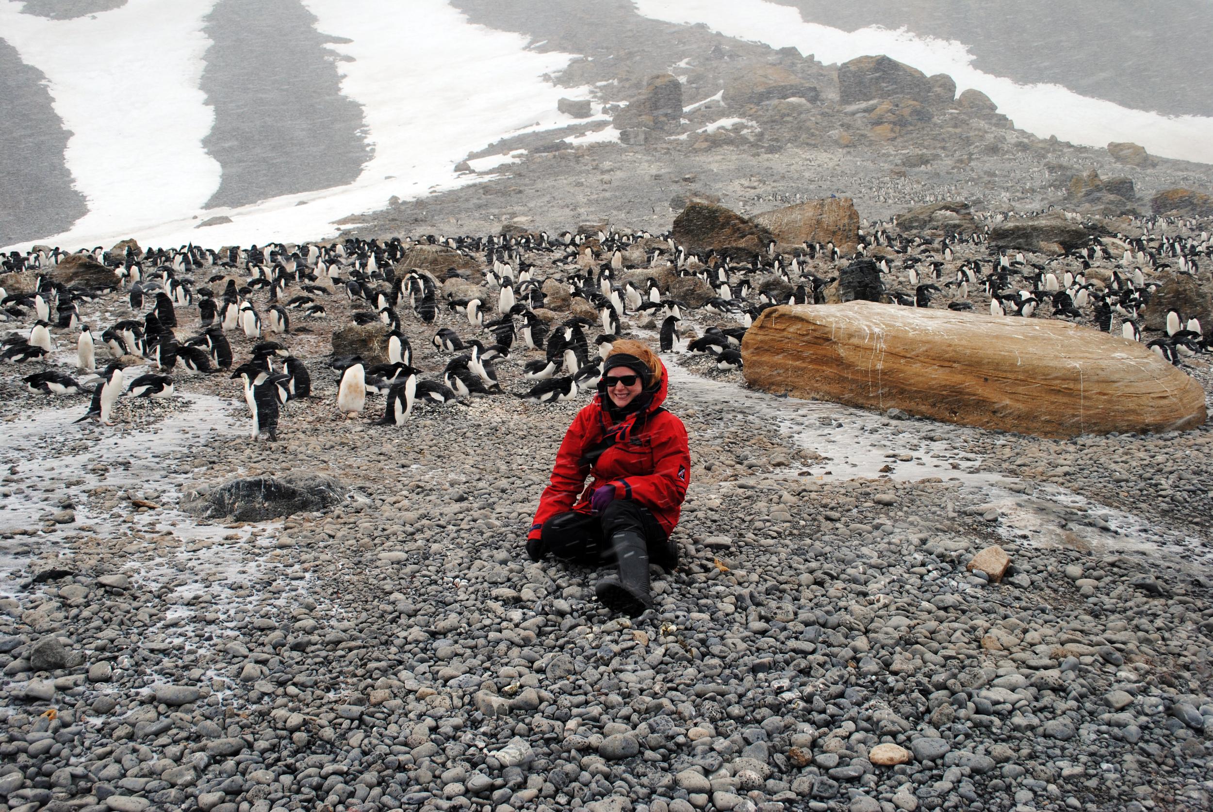 Brown Bluff, Antarctica, penguins - Maggie a la Mode