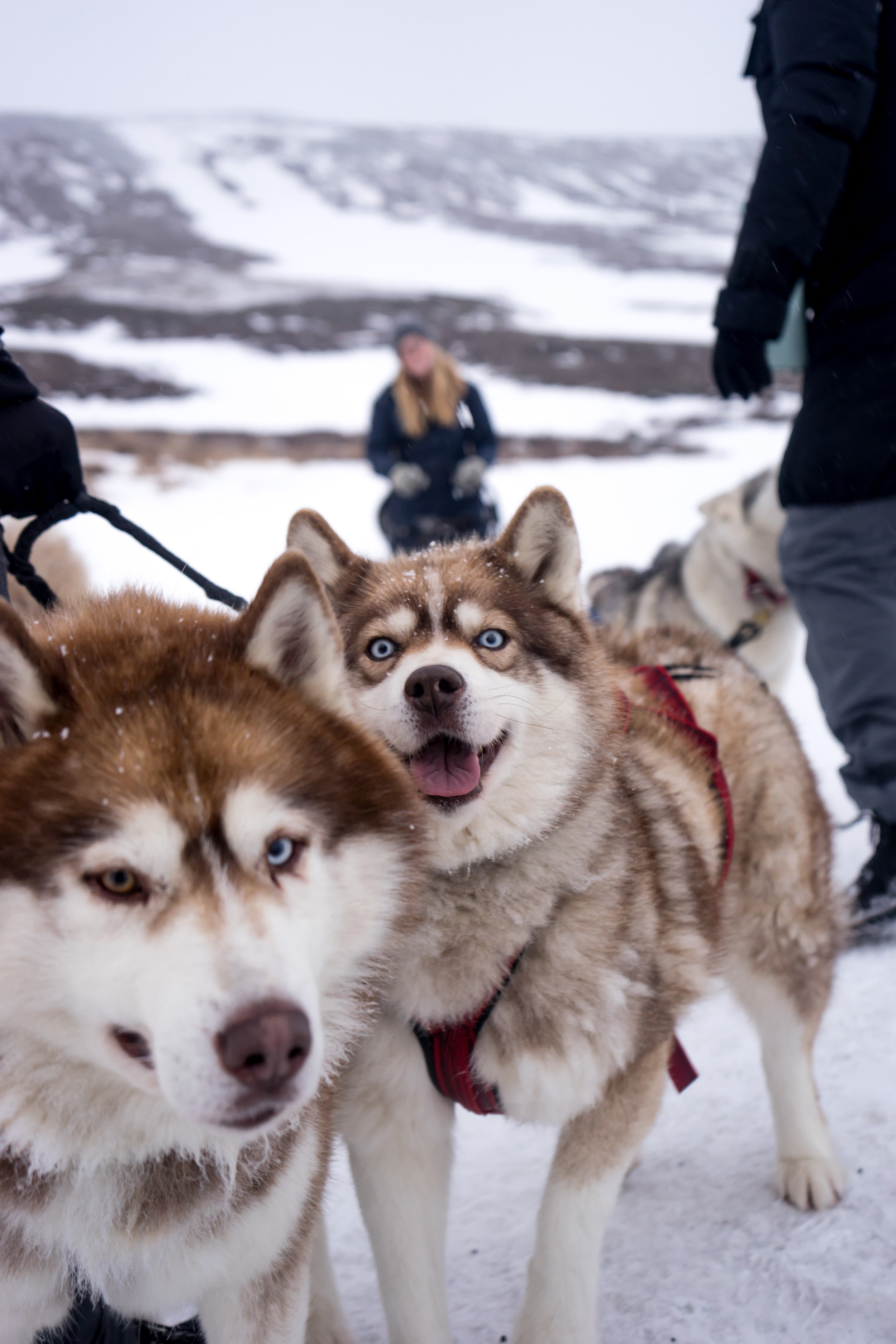 Maggie a la Mode - Why You Need to Visit Iceland in Winter Dog Sledding-2.jpg