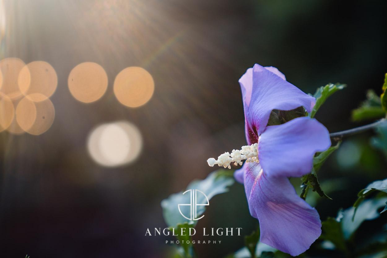 Viewpoint at Buckhorn Creek   Purple flower