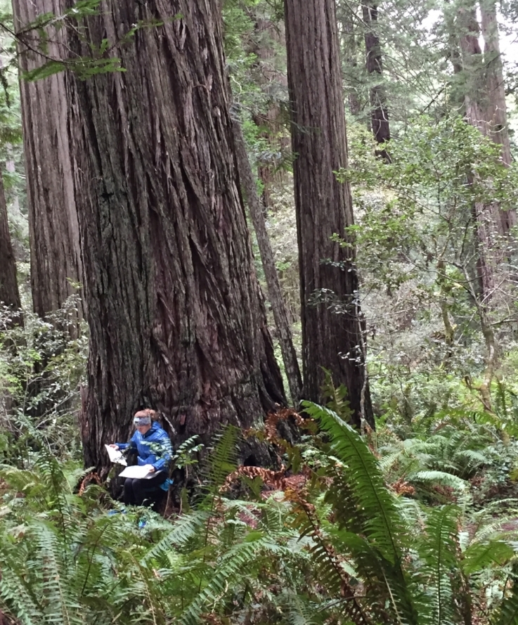Redwoods National Park, California, 2017