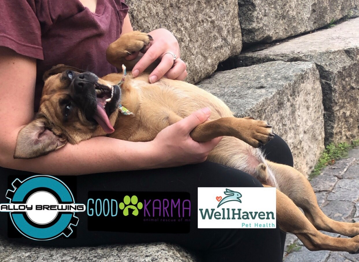 Come join WellHaven Pet Health and Good Karma Rescue of MN at Alloy Brewing Company for a fun time on the patio!  Get your free WellHaven swag/coupons, meet adoptable dogs and support a local rescue all while enjoying a cold brew!