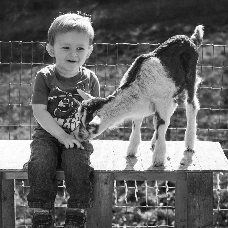 """Isaac, 2 years old, climbing goat """"jungle gyms"""" with one of our wee little ones"""