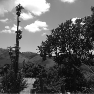 Chikukwa Ecological Land Use Community Trust