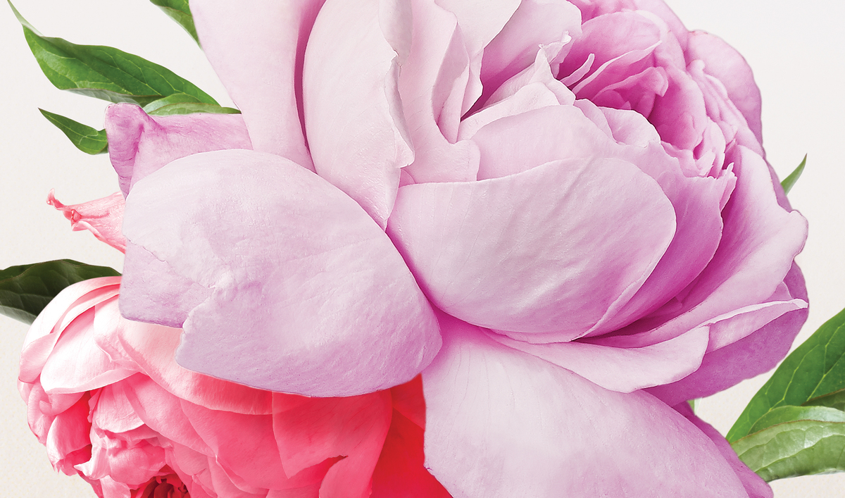 bloom-flowers.jpg