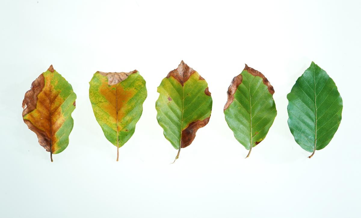 leaves-dying.jpg