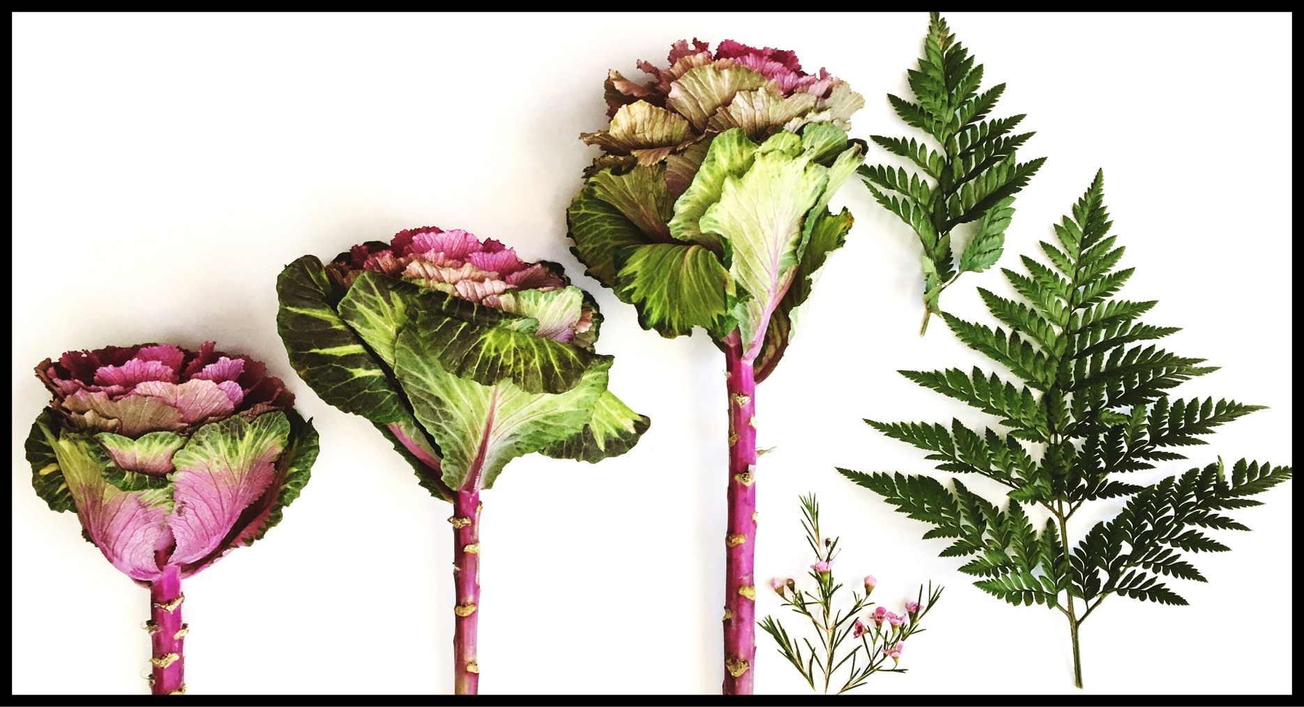 Gather Mother nature's finest - KALE – FERN – TEA TREE BLOSSOM