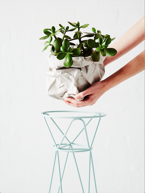 The Feline  - The Feline is suited to a wide range of botanical vessels including smaller pots, vases and plant bags.