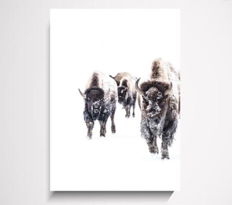 Yorklee Wall Art Prints - Buffalo wall art print