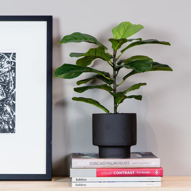 Fiddle+Leaf+Lily+Urban.jpg
