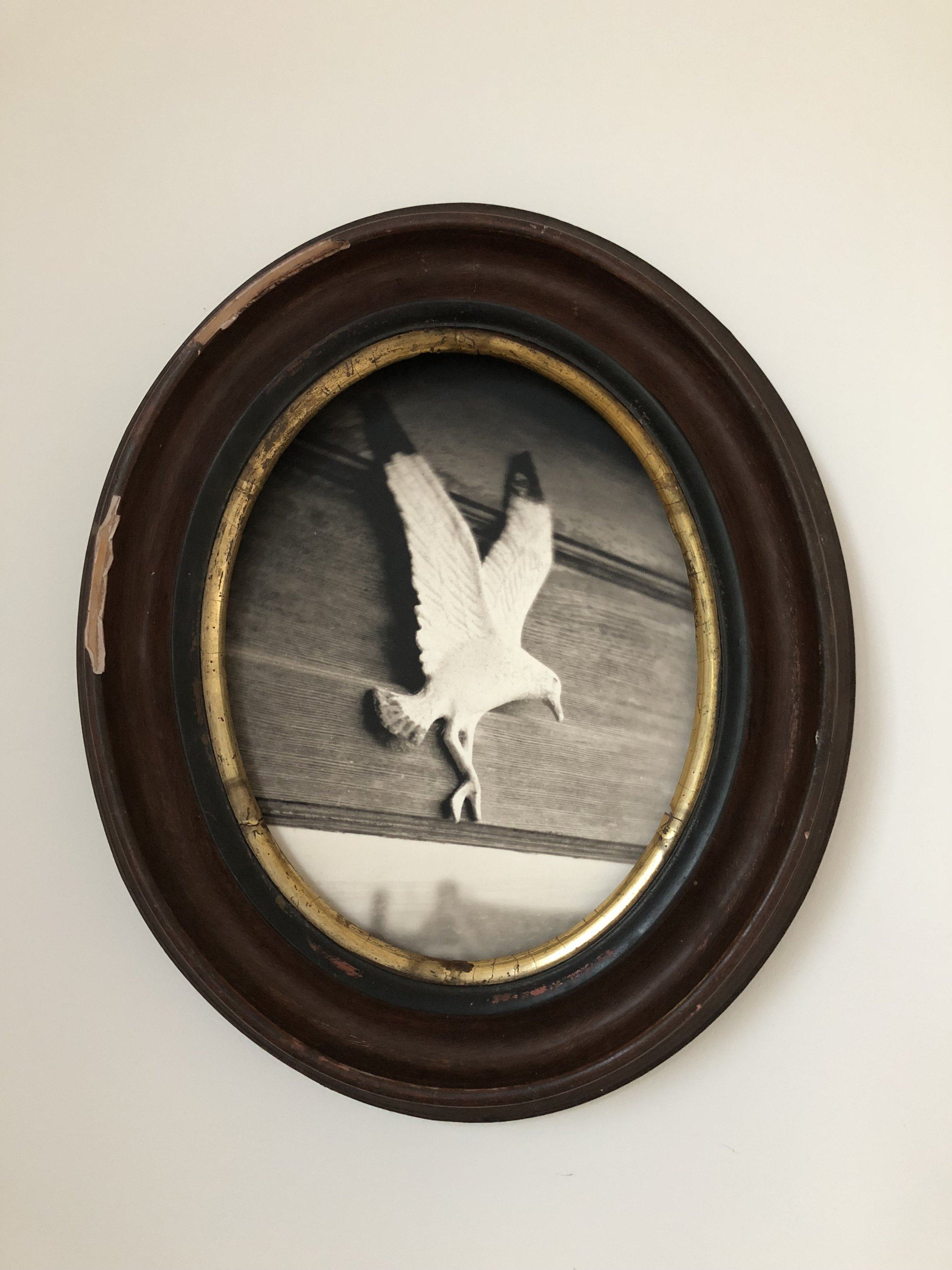"""Detail from our installation for the  CMCA Biennial . """"Gull at the Threshold""""."""