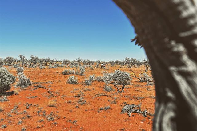 """Extrinsic motivations (family outings as a child in nature) have driven me to my intrinsic motivations (to become a scientist)."" ~ Emma the Scientist . . . #projectOzScav #science #scicomm #filmmaking #outdoors #australia #desert #stories #nikon #landscape"