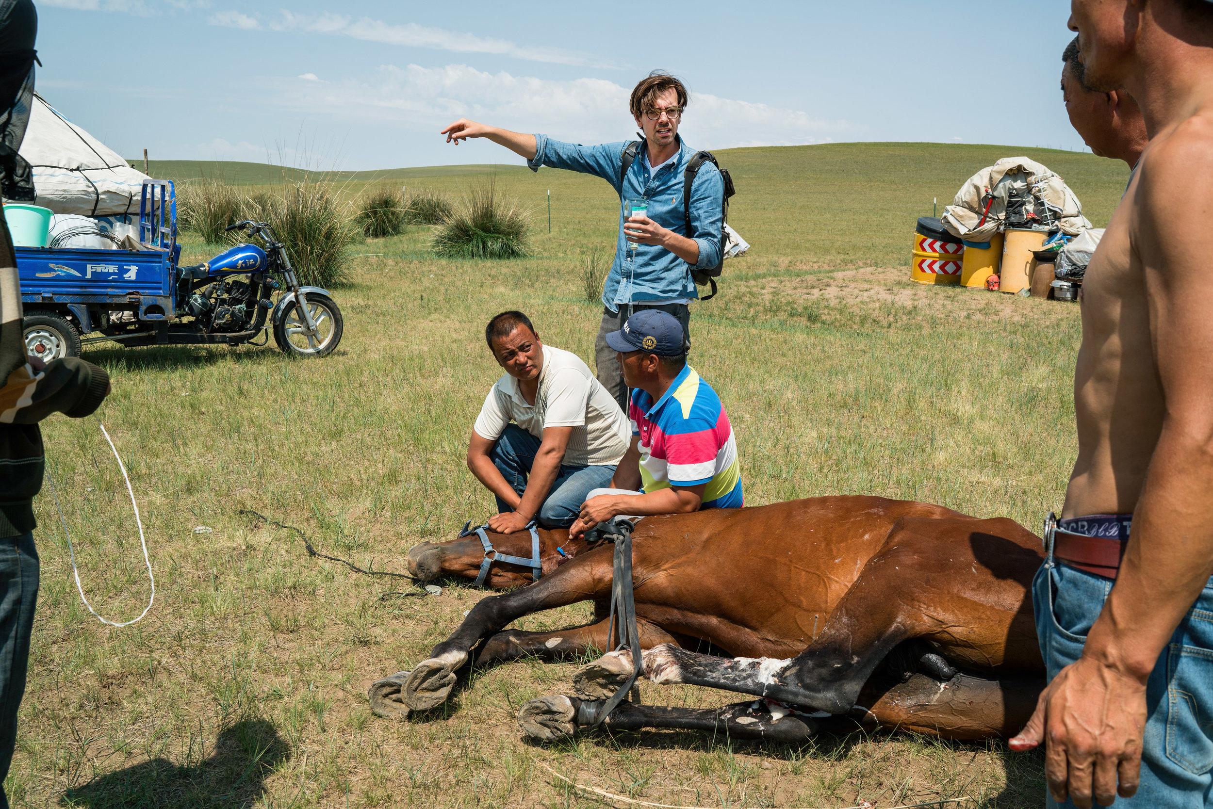 ©-Joost-van-Herwijnen---DHHVC---Ruben-aflevering-1--01---hechten-van-gewond-paard.jpg