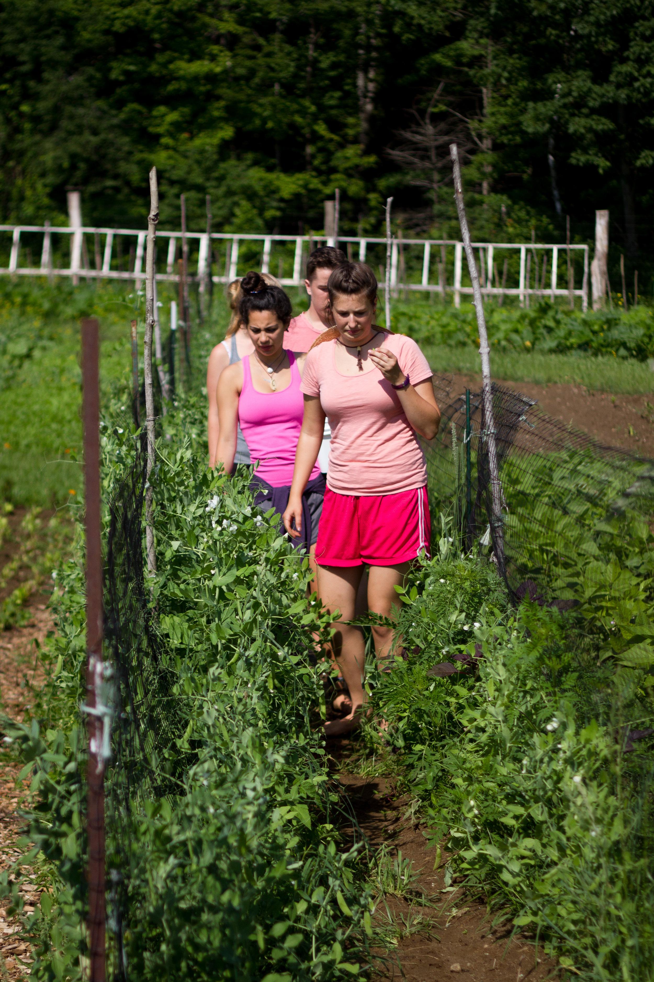 Farm&Garden-7.jpg