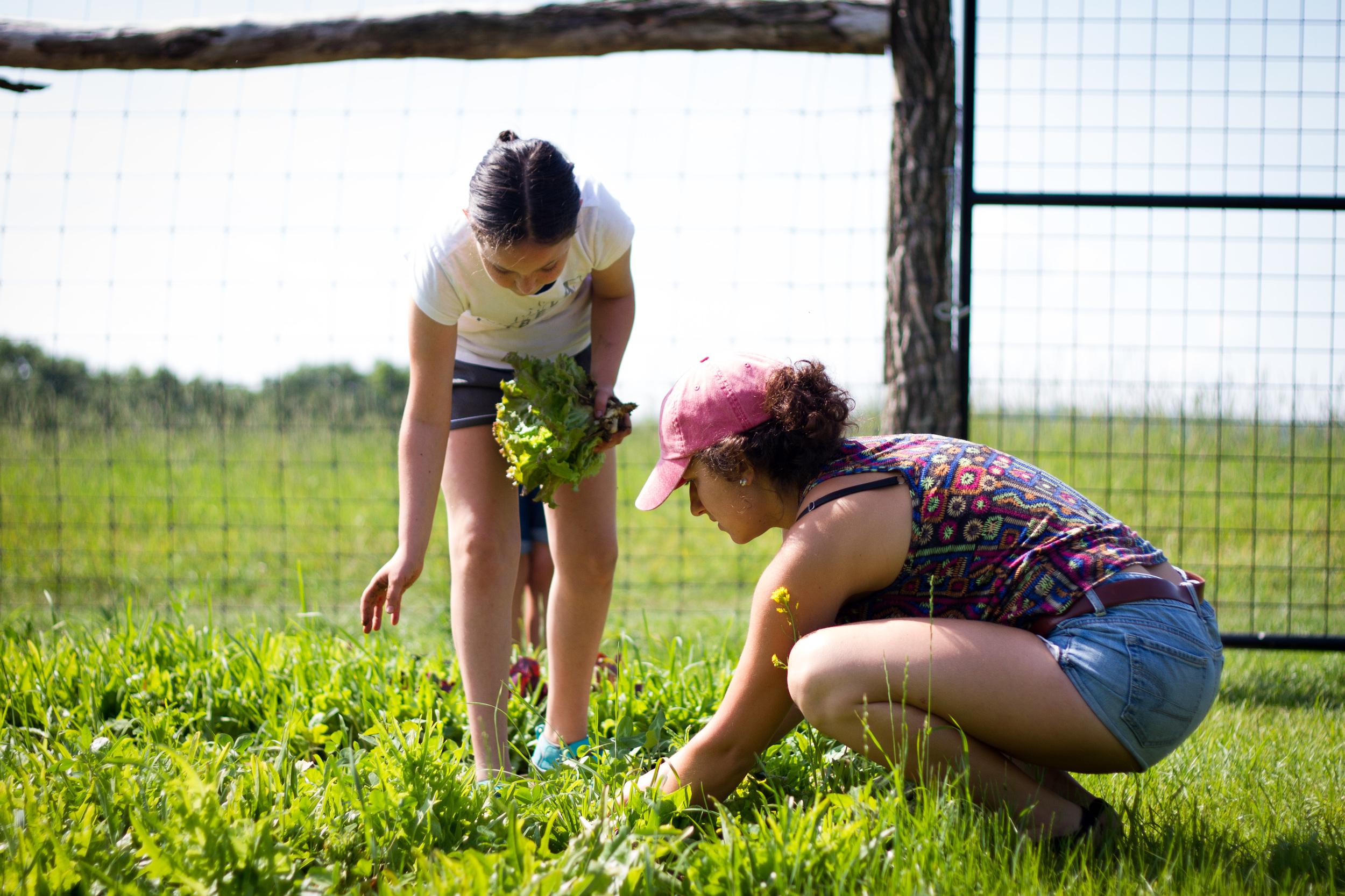 Farm&Garden-8.jpg