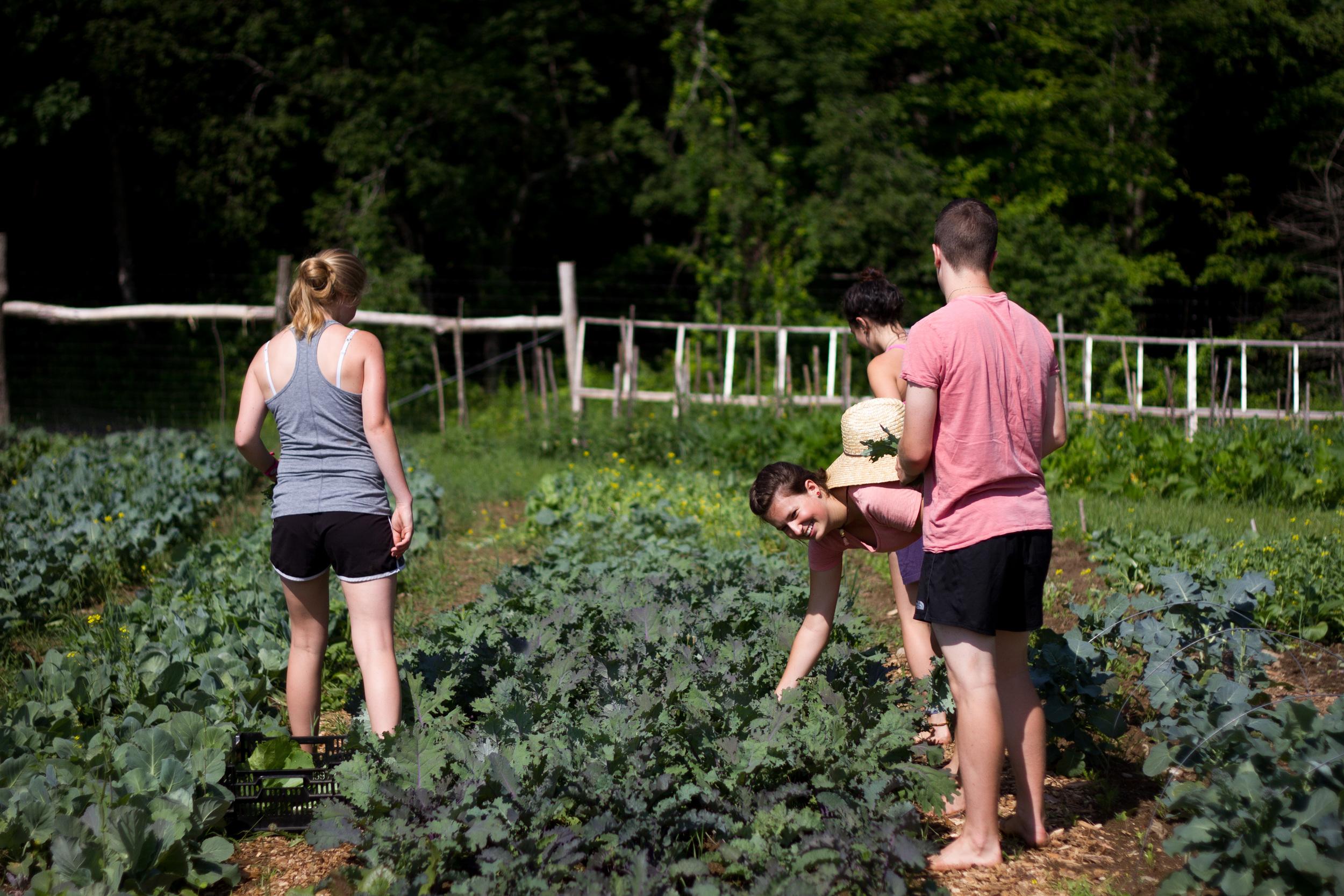 Farm&Garden-10.jpg