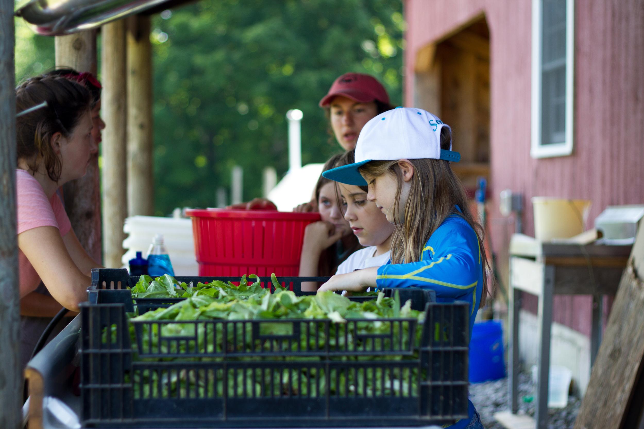 Farm&Garden-12.jpg